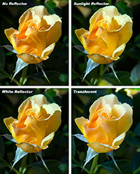 Yellow Rose Results