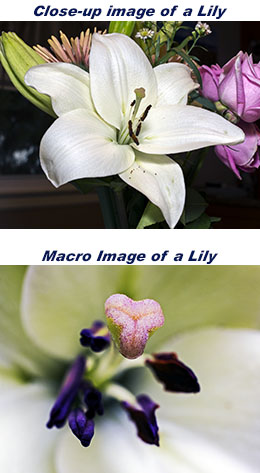 Closeup vs Macro